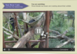Three sun bears in webcam view